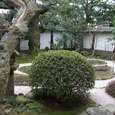 出雲庵の庭